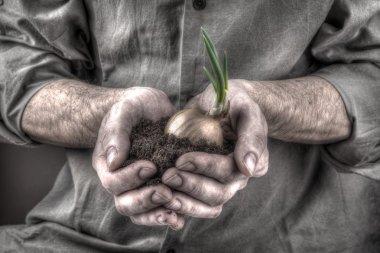 Plant in hands stock vector