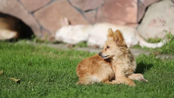 Metráž - psi a kočky jsou pokládání, jíst trávu na slunečný den