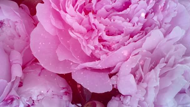 Gyönyörű rózsaszín virágok rózsa csillogás
