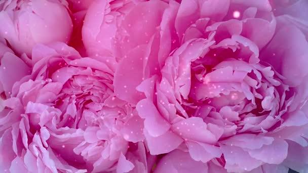 Krásné růžové květy růže třpyt
