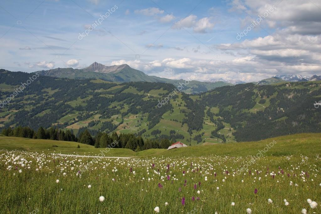 Green summer landscape in the Bernese Oberland