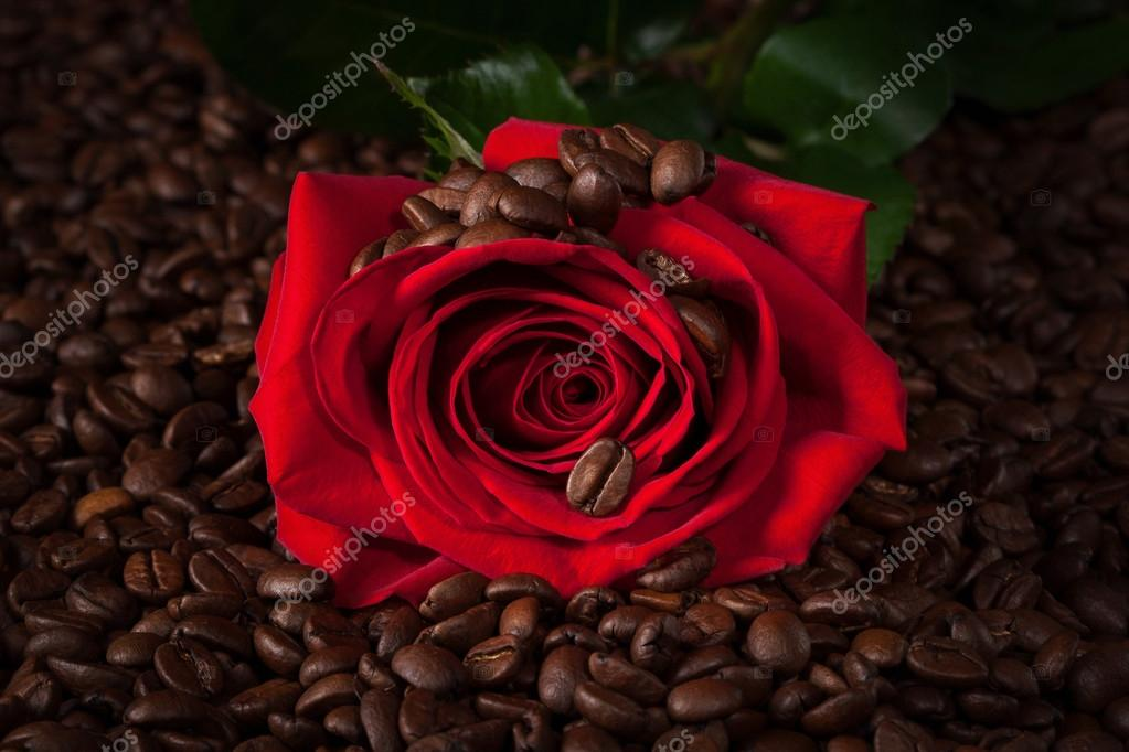 close up of red rose on roasted coffee beans