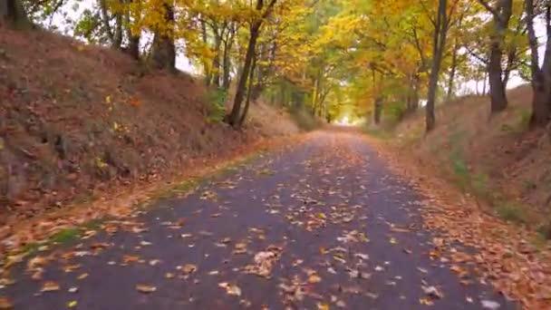 Jízda v barevné uličce. Podzimní lesní scenérie s cestou podzimního listí a teplým světlem ozařující zlaté listí. Stezka ve scéně podzimní les příroda.