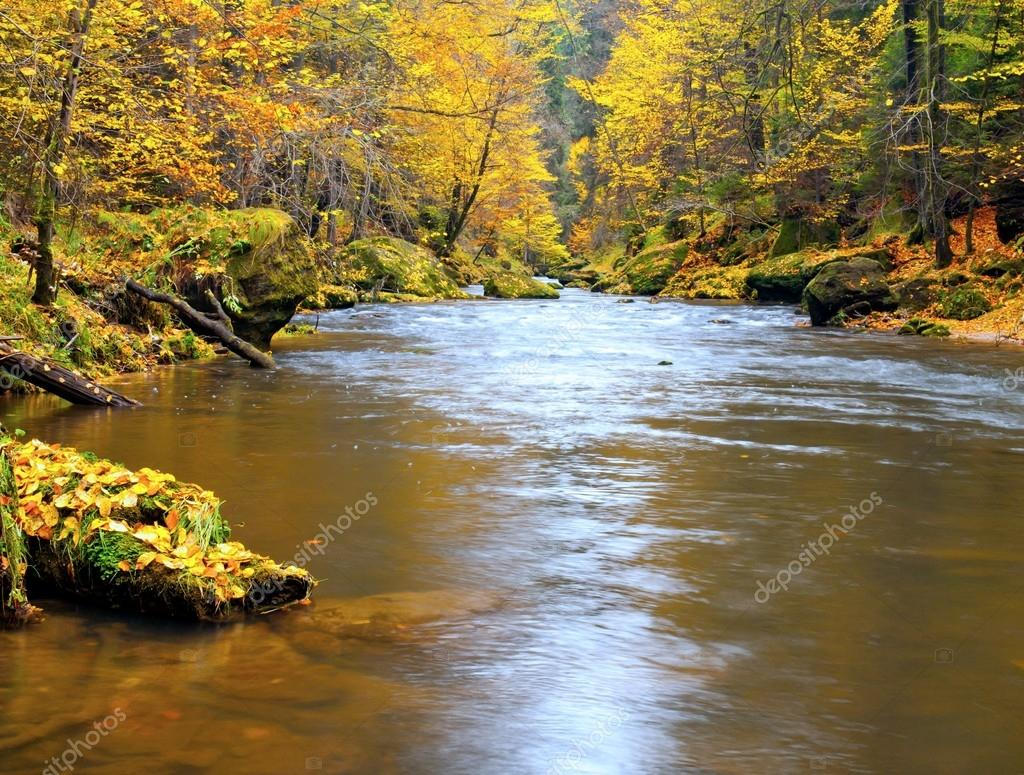 Autumn mountain river banks. Gravel and fresh green mossy boulders  on river banks covered with colorful leaves from beeches, maples and birches.