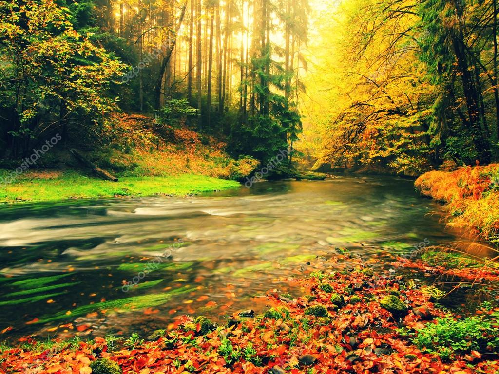 Stony bank of autumn mountain river covered by orange beech leaves. Fresh green leaves on branches above water make colorful reflection in level