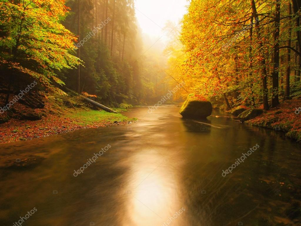 Sunset above mountain river covered by orange beech leaves. Fresh leaves on branches above water make reflection