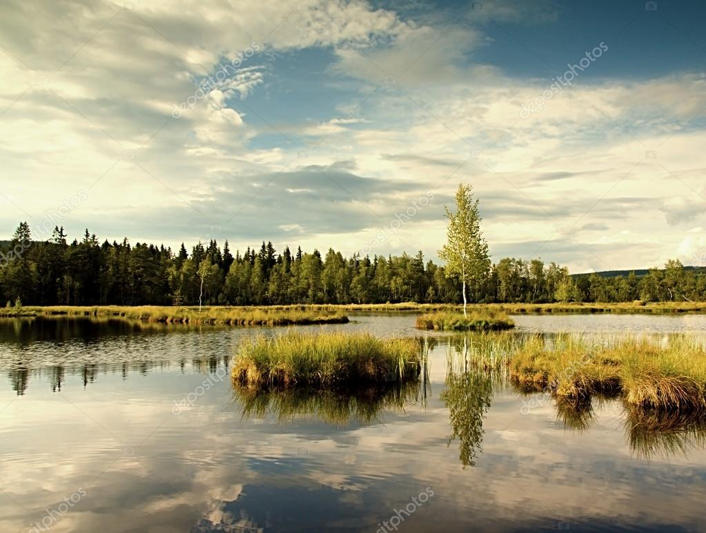 Early morning autumn lake in dreamy forest, young tree on island in middle. Colorful herbs and grass on islands, heavy clouds in sky.
