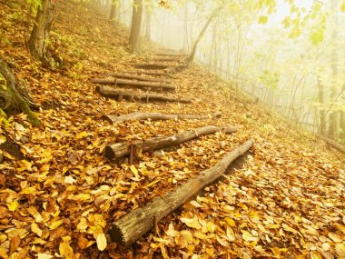 Wooden trunk steps in autumn forest, tourist footpath. Colorful autumn park.