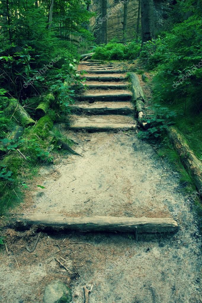 escaleras de madera viejas en senda de turista jardn bosque denso pasos de troncos