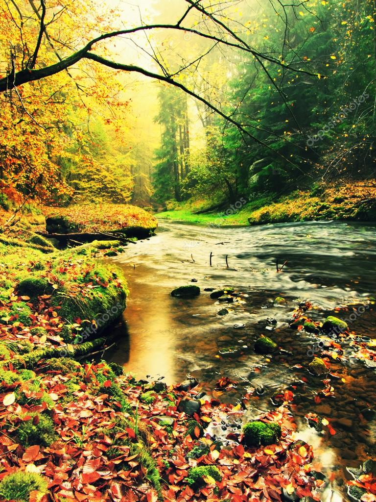 Mountain river with low level of water, gravel with colorful beech, aspen and maple leaves. Fresh green mossy stones and boulders on river bank. Rainy day.