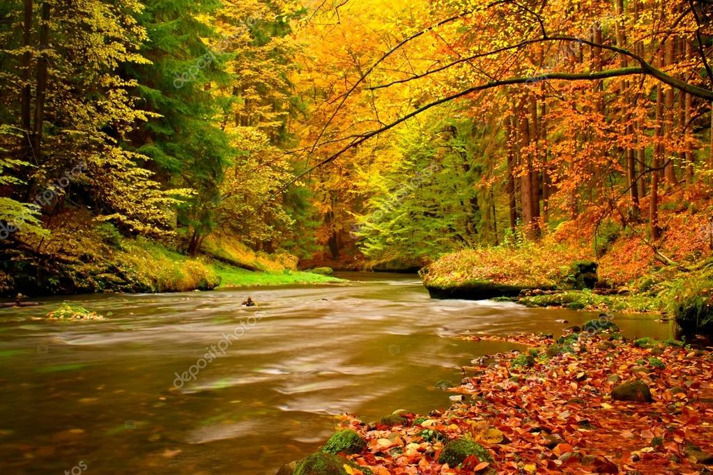 Autumn mountain river. Blurred waves,, fresh green mossy stones and boulders on river bank covered with colorful leaves from old trees