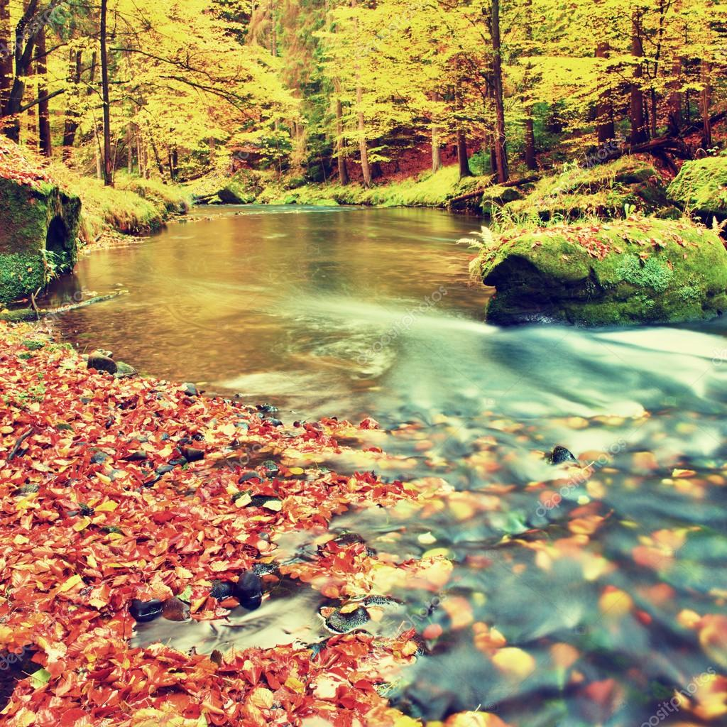 Colors of autumn mountain river. Colorful gravel with fallen rotten  leaves, leaves trees bended above river.