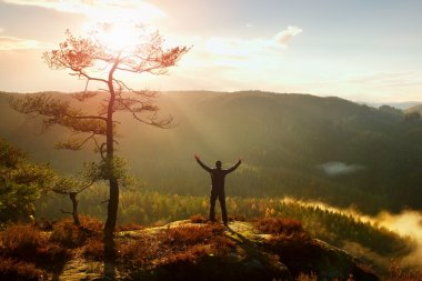 Sunny morning. Happy hiker with hands in the air stand on rock bellow pine tree. Misty and foggy morning valley.