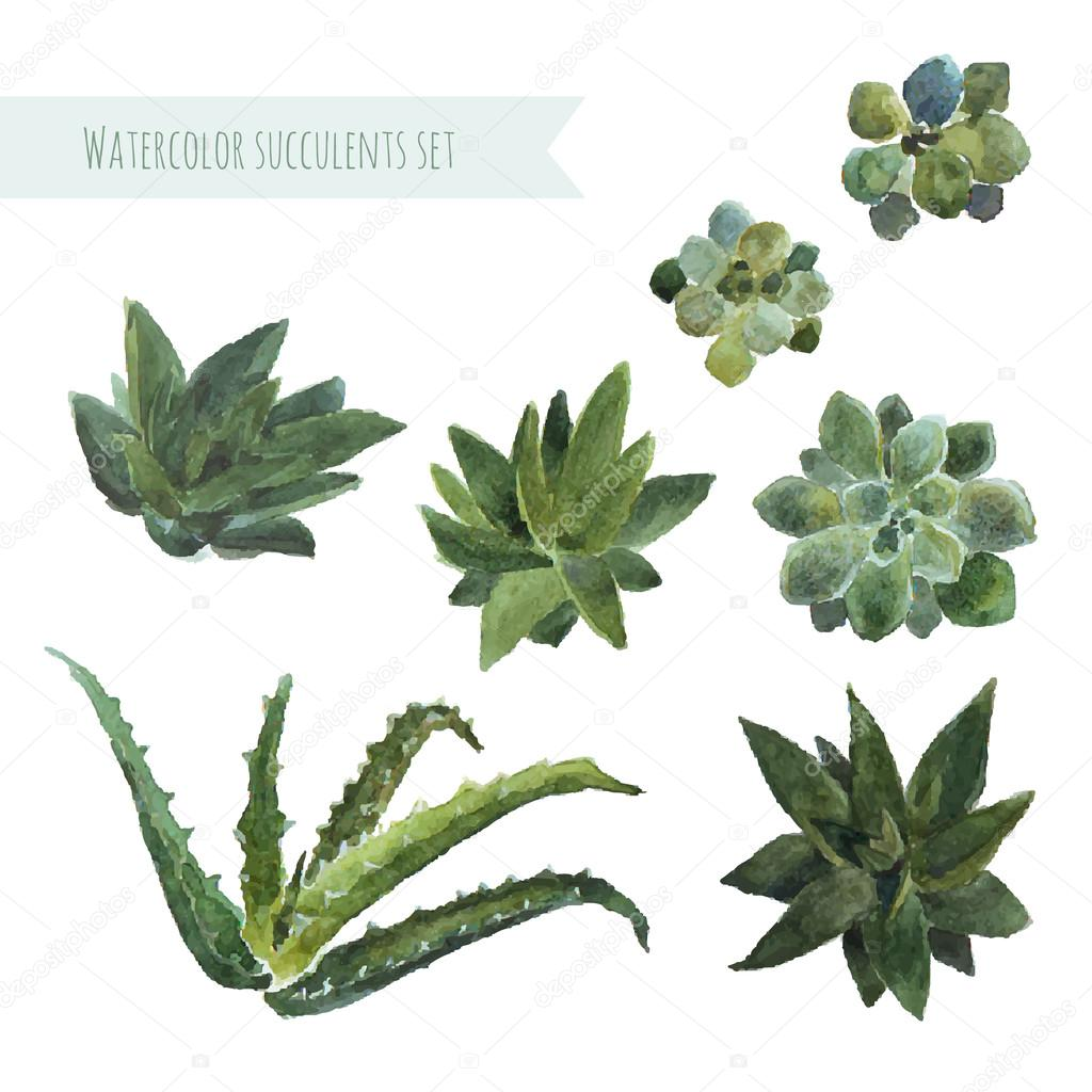 Watercolor set succulent plants