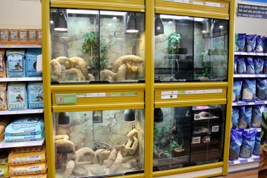 Reptile Display tanks in a pet store.