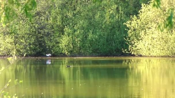 Jezera v parku