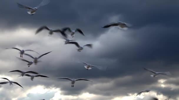 Racky letící a mraky