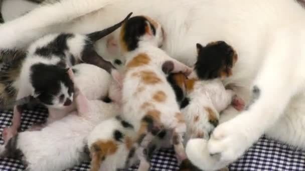 Kitty Baby Cats Feeding from Mothers Breast