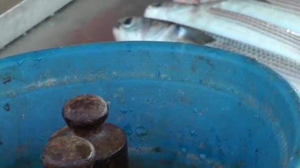 Prodejna ryb