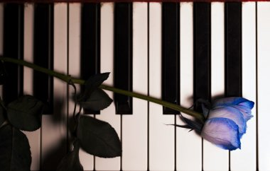 Blue Rose on Piano Keys