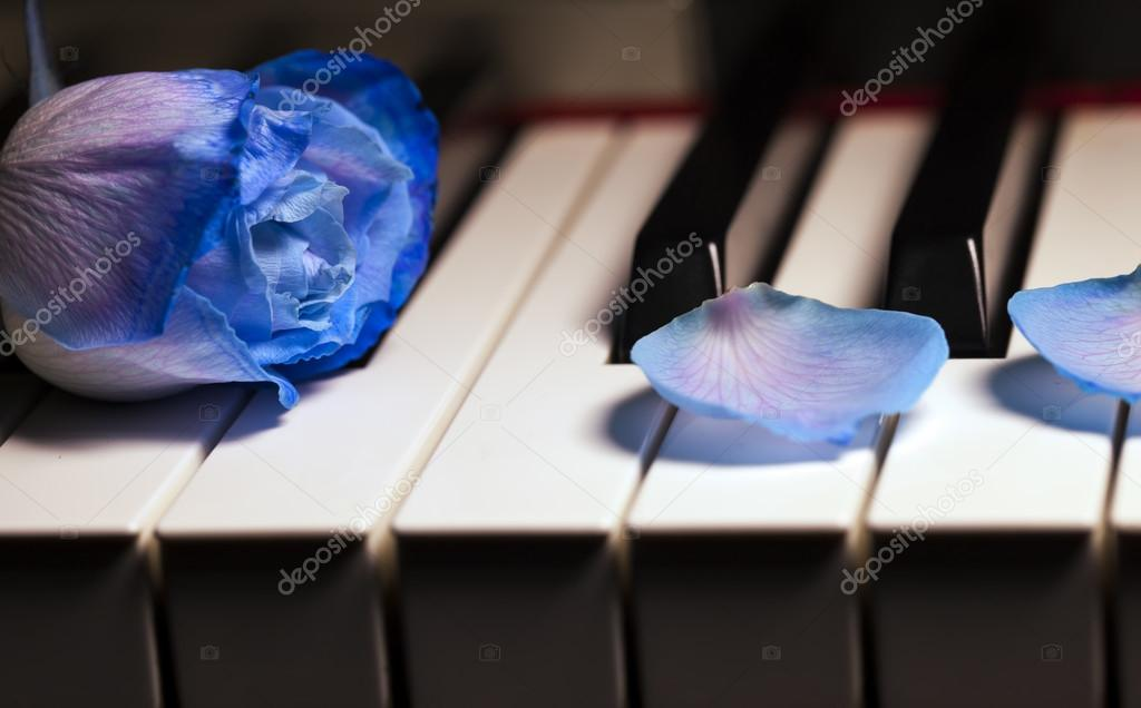 Blue Rose on Piano Keys