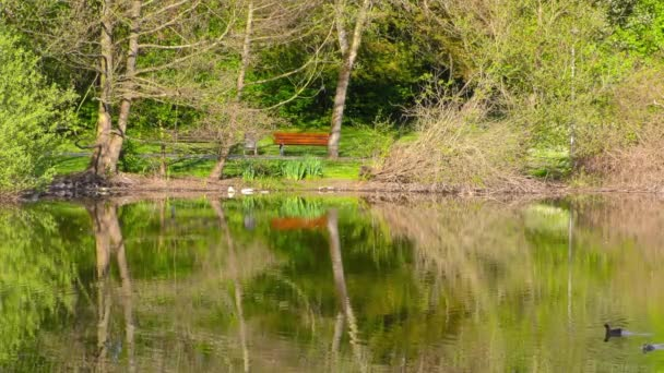 Green Lake and Nature in Park