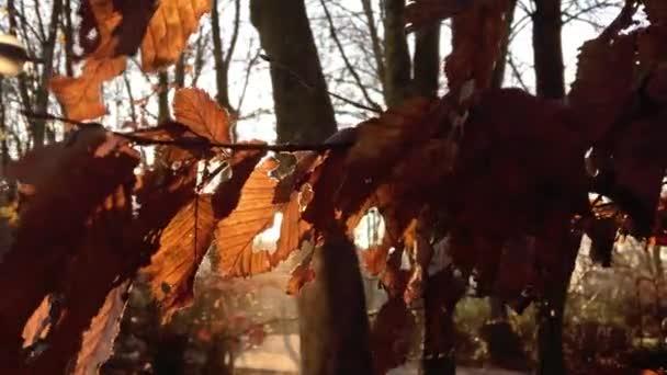 Suché listí a sluneční světlo v přírodě