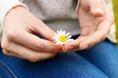 Fotografie Heřmánek květ v rukou. Zobrazit detail