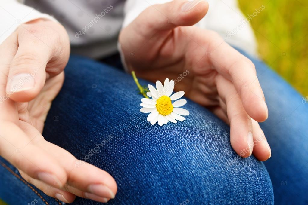 Camomile flower in hands. Close-up view
