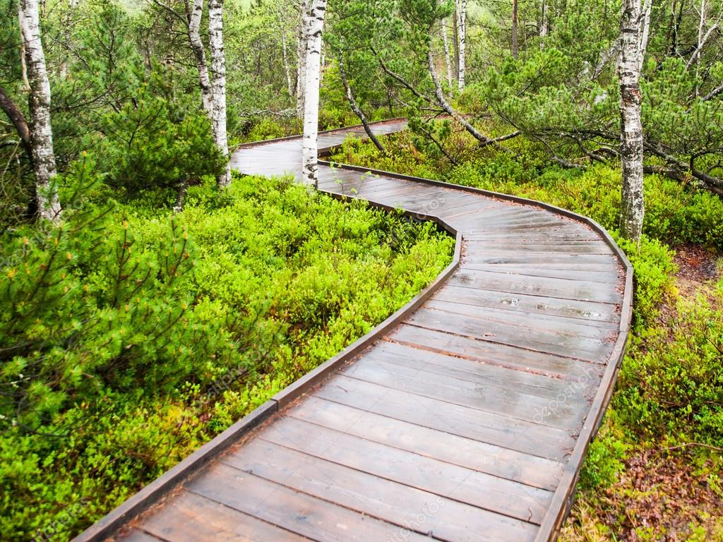 Sentiero stretto in legno nella foresta foto stock for Piani artigiani per lotti stretti