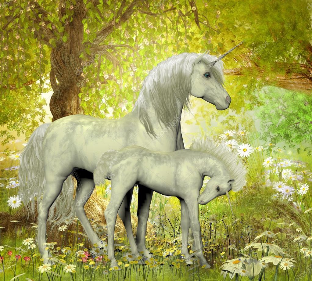 Unicorns and White Daisies