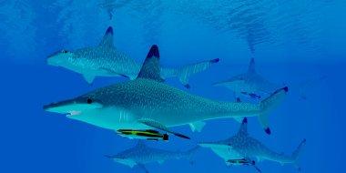 Hammerhead Shark Gro