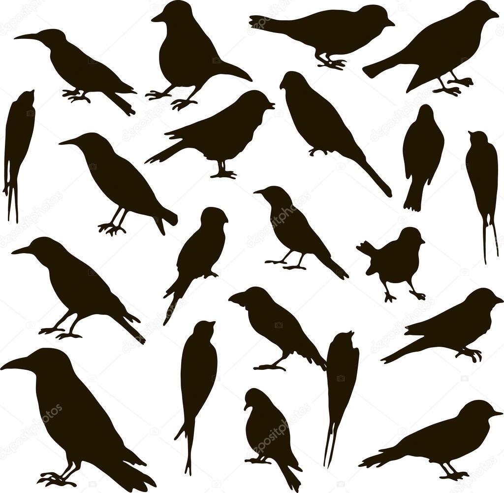 Vector: aves | conjunto de vectores de siluetas de aves — Vector de ...