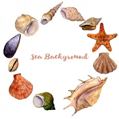 vector round frame with watercolor drawing shells