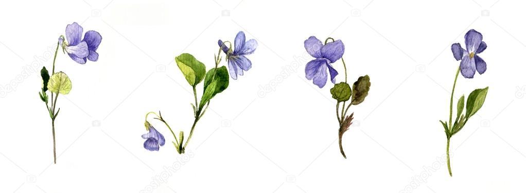 Aquarelles Fleurs Sauvages Bleues Photographie Cat Arch Angel