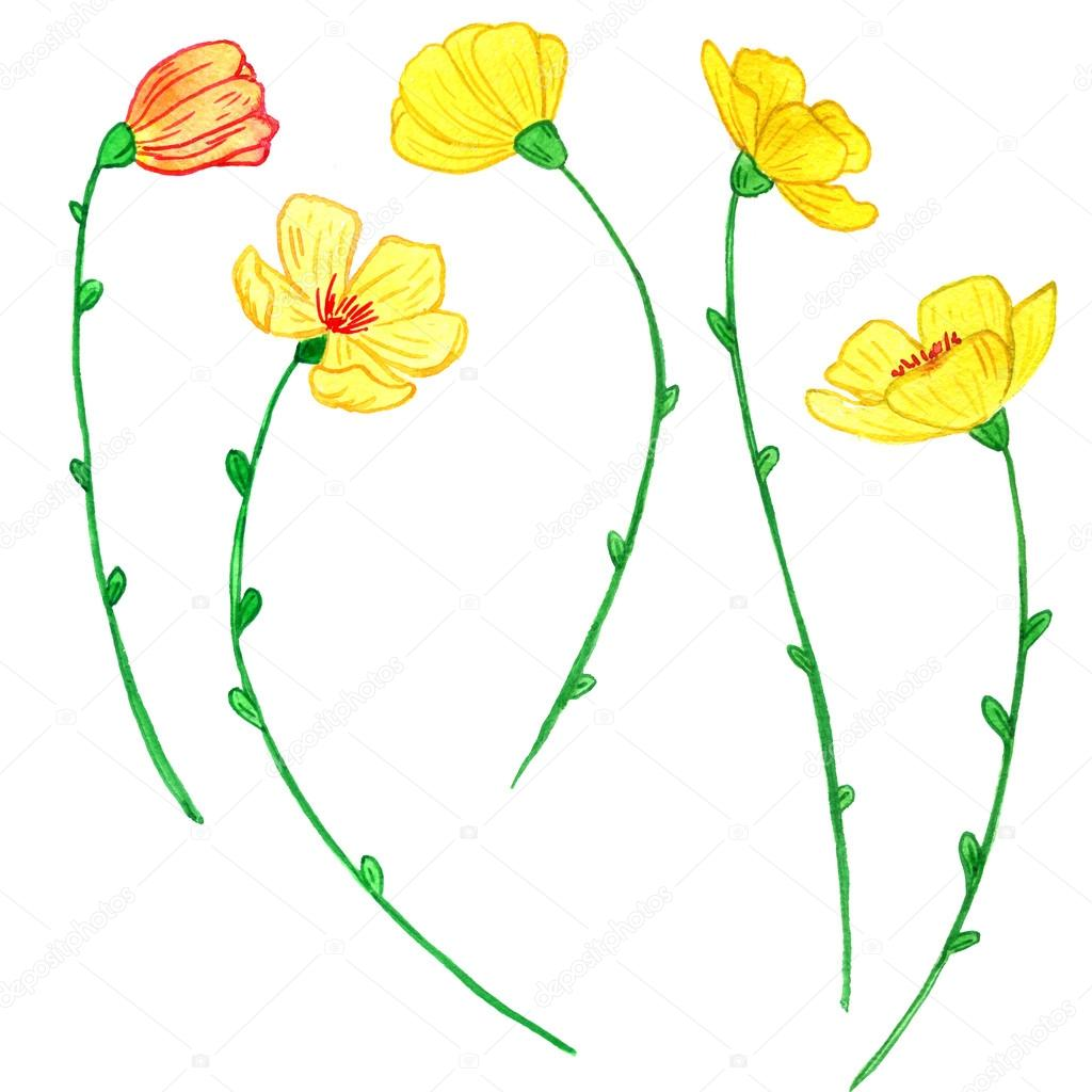 Watercoolor Drawing Yellow Flowers Stock Photo Catarchangel