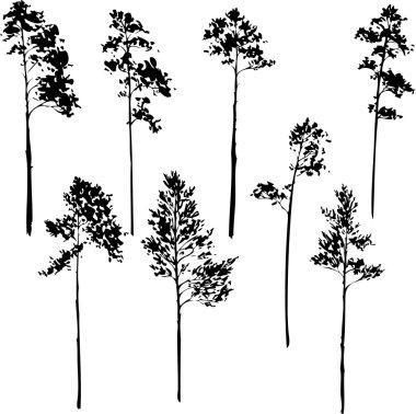 set of pine trees