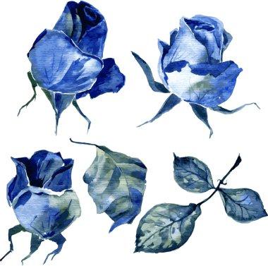 set of watercolor drawing roses