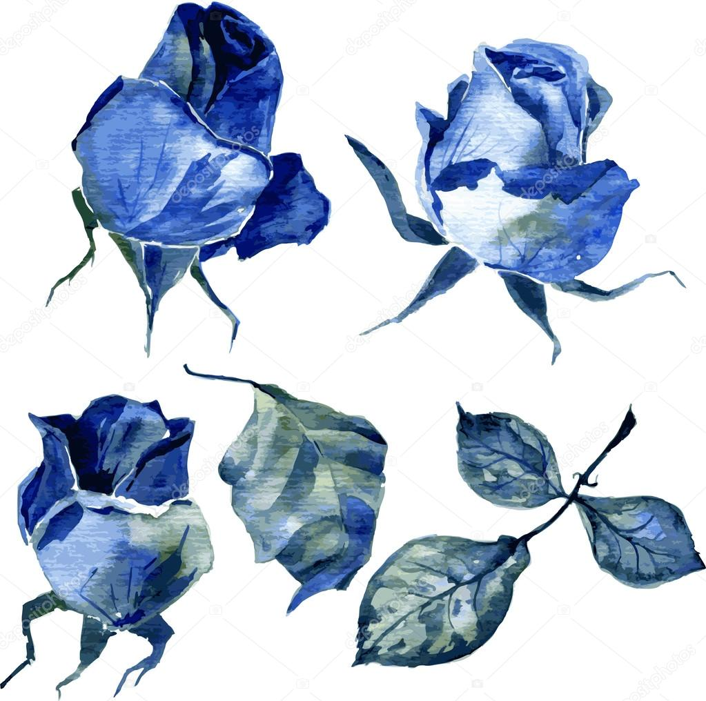 set of watercolor drawing roses