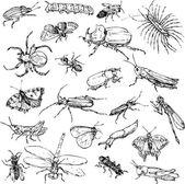 Fényképek vonalas rajz rovarok gyűjteménye