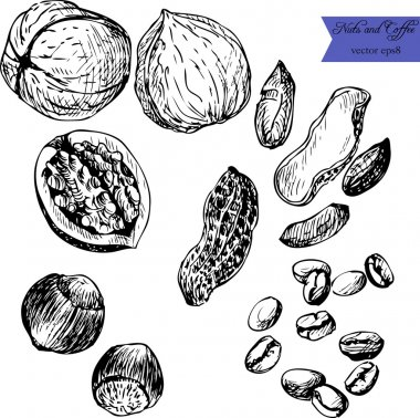 set of line drawing nuts