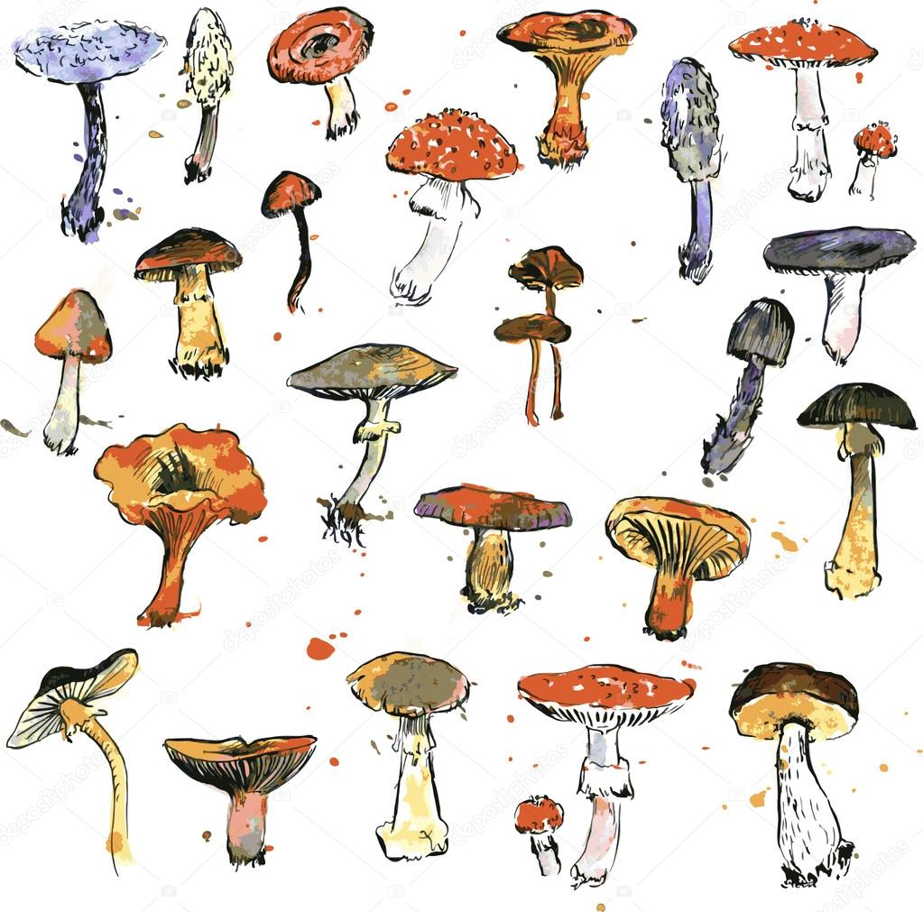 Set of watercolor drawing mushrooms