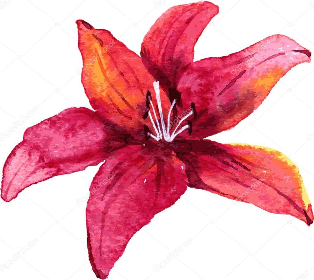 Watercolor drawing lily flower stock vector cat arch angel 62933403 - Dessin fleur de lys ...