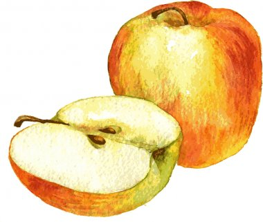 whole apple and half drawing by watercolor