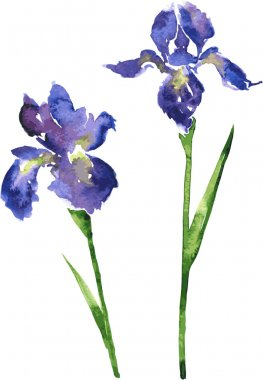 two watercolor blue flowers