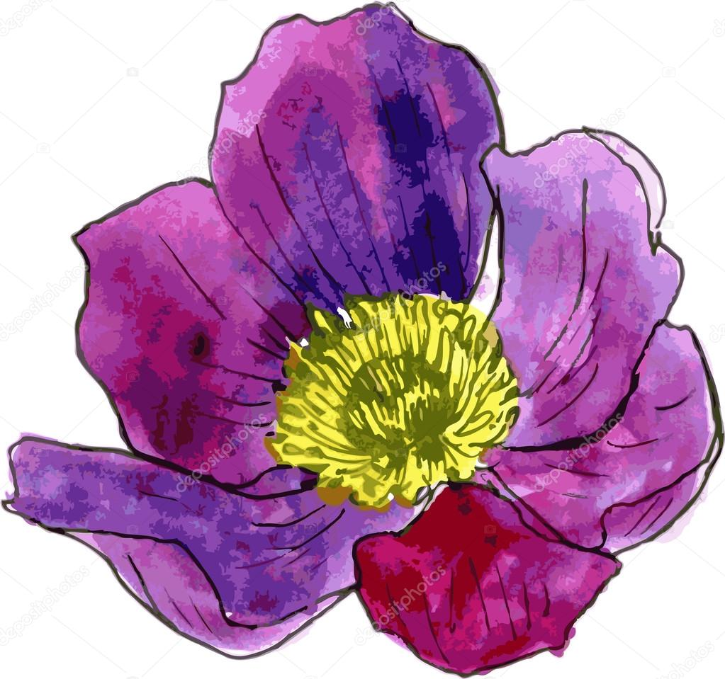 watercolor drawing purple flower