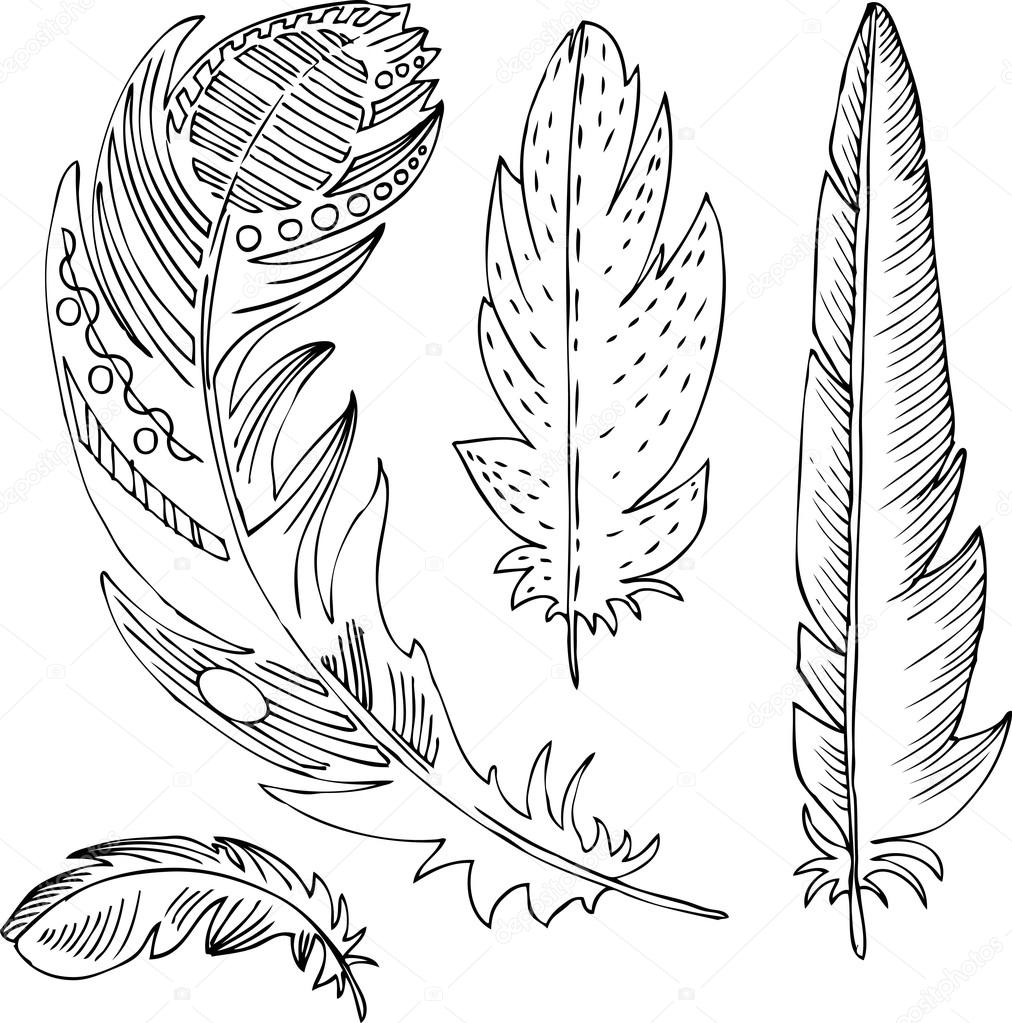 set of line drawing feathers