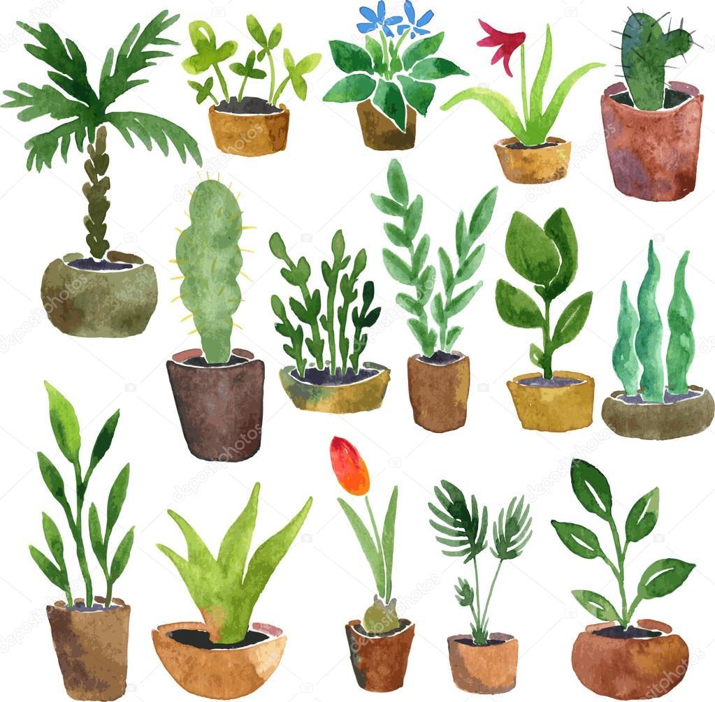 Рисунки с растениями в разных условиях