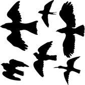 Fényképek vektor készlet-ból madarak sziluettek
