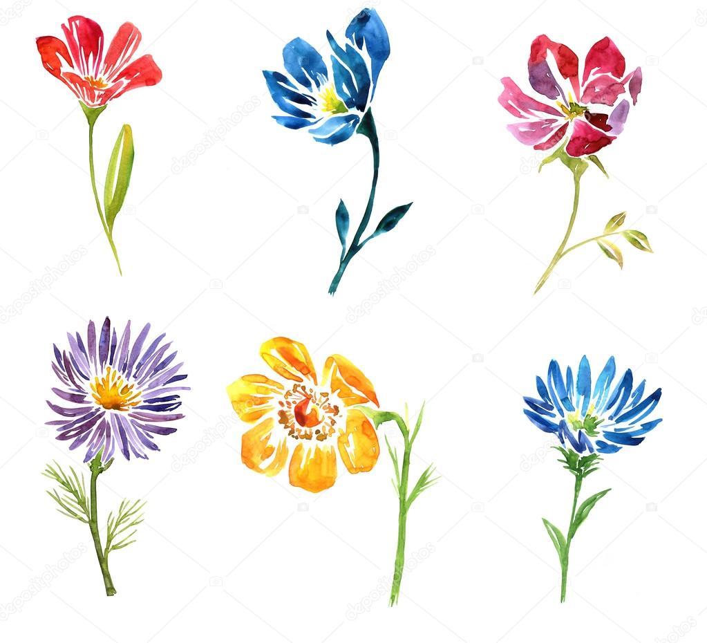 Aquarelle Dessin Fleur Photographie Cat Arch Angel 80031956